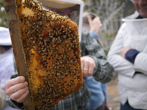 bees honeycomb beeswax