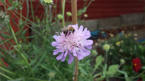 bitės,gėlė,wildflower,sodas,gėlių,apdulkinimas,sezonas,žiedas,augalas,vabzdys,gamta,išplistų