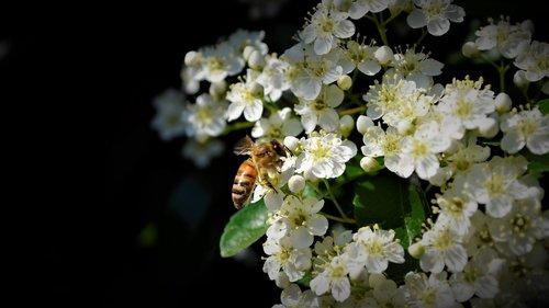bees  nice  bee