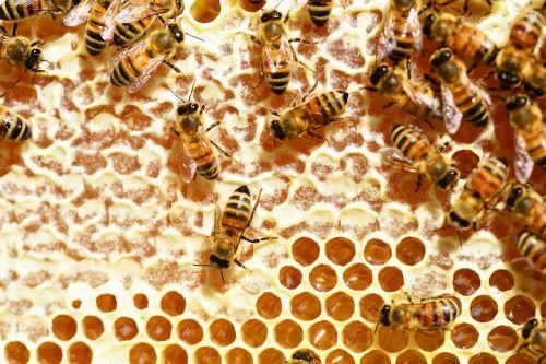 bees honey honey bees