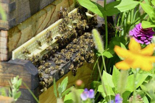 bees  beehive  bee