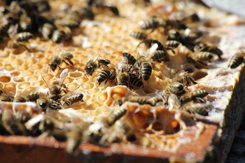 bees  honey  summer
