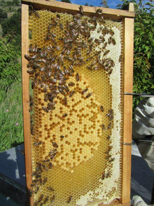 bees beehive honey