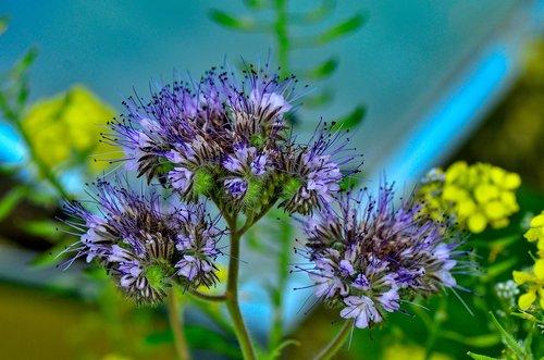 bees  plant  bueschelschoen