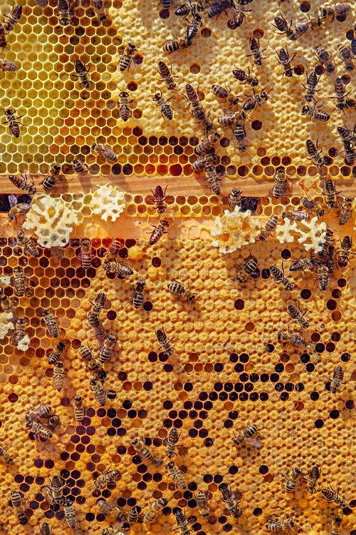 bees  nature  animals