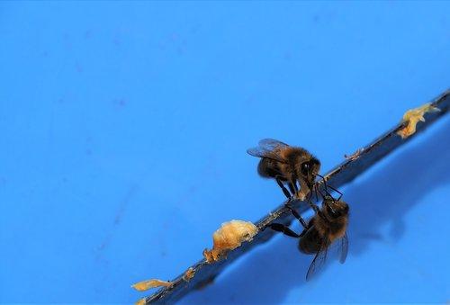 bees  wax  hive