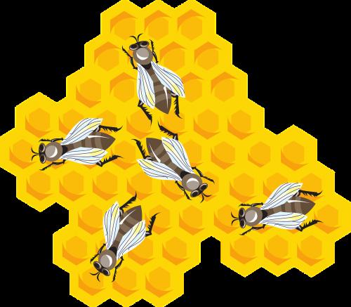 bees honeycomb combs