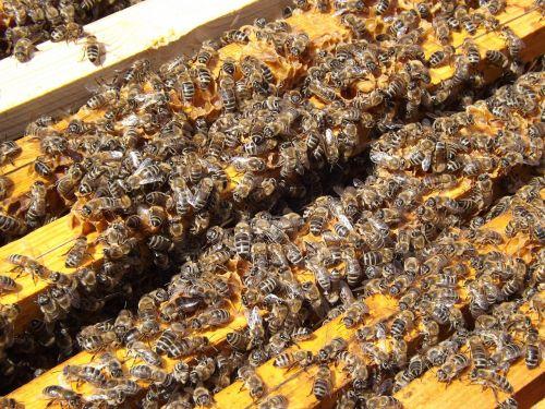 bees beehive beekeeping