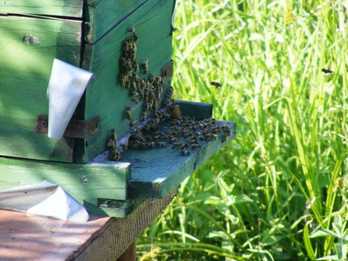bees hive beehive