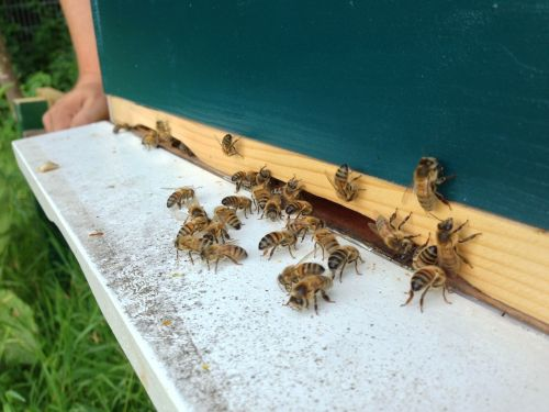 bees hive fly shelf
