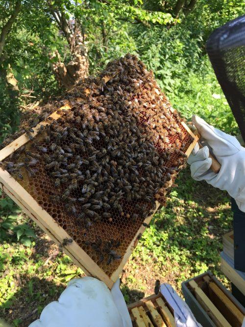 bees beekeeper honeycomb