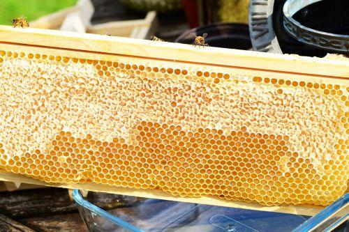 bees on frame honey honey bees