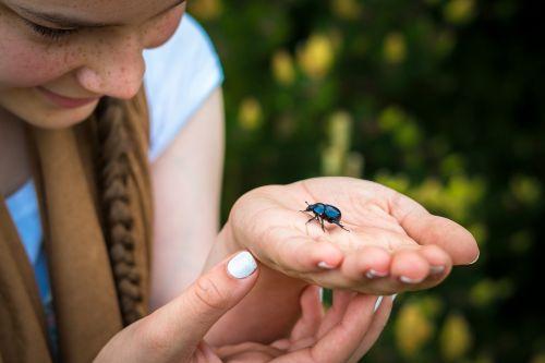 beetle dung beetle hand