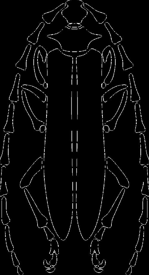 beetle longhorn pattern