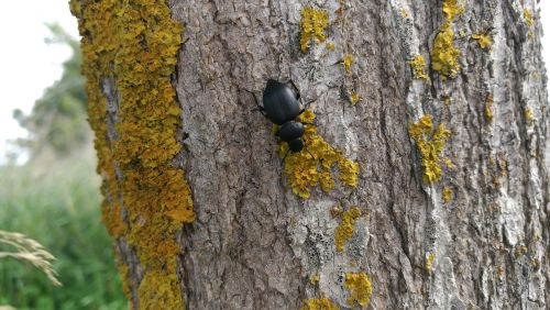 beetle nature insect
