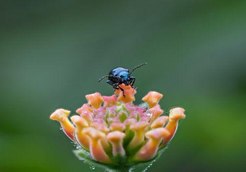 beetle 2 hanoi vietnam