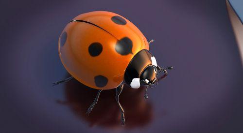 beetle lucky ladybug ladybug