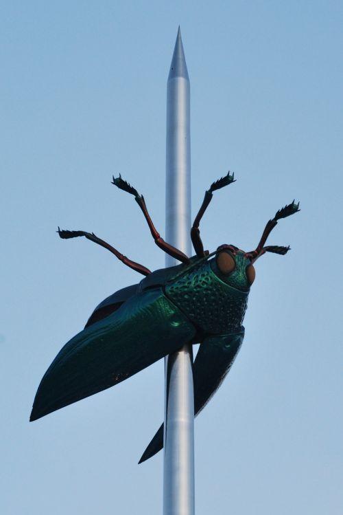 beetle art bug