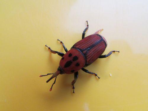 beetle insect bug