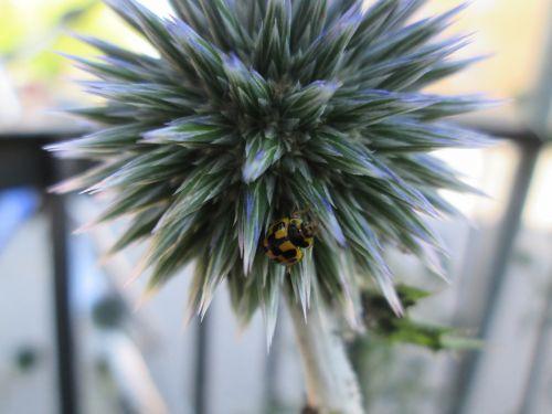 beetle yellow black
