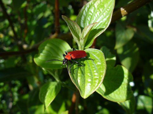beetle antenna comb