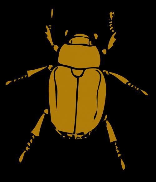 beetle stink bug