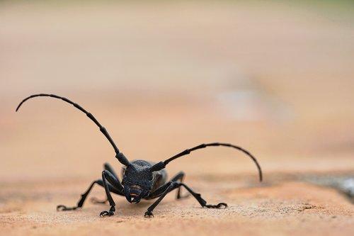beetle  bock  nature