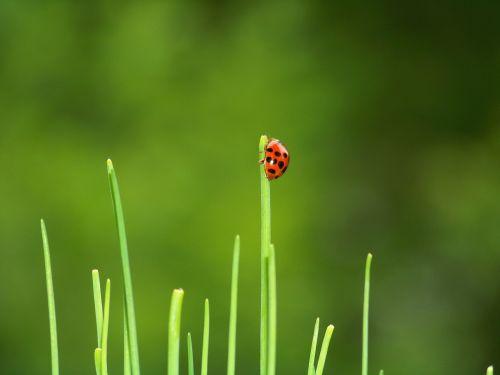 beetle ladybug garden
