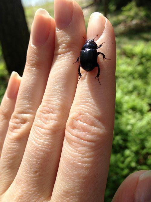 beetle hand fingers