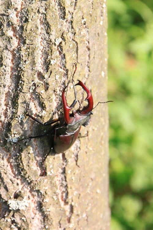 beetle climbing male