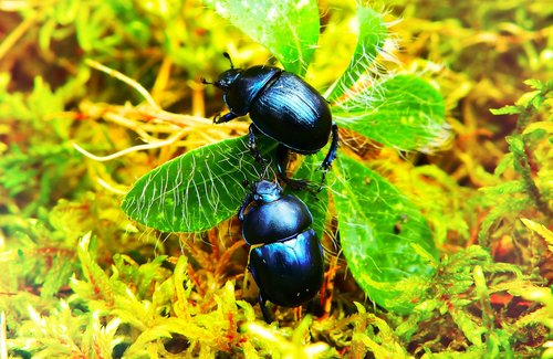 beetles forest  insects  plant