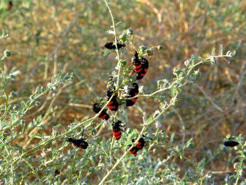 Beetles On Bush