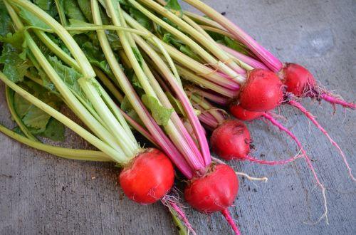 runkeliai,derlius,ekologiškas,maistas,sezonas,sodininkystė,šviežias,gamta,natūralus maistas,žaliavinis,žalias maistas,organinis maistas,pasėlių
