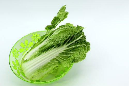 beijing cabbage  chinese cabbage  food