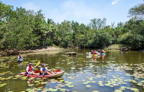 belize bacab jungle park kayaks