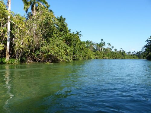 Belizas,upė,atogrąžų miškai,džiunglės,boot,gamta,atogrąžų,Centrinė Amerika,tropikai,vanduo,miškas,papartis,atogrąžų miškas,veidrodis,atvirukas,kraštovaizdis,žalias