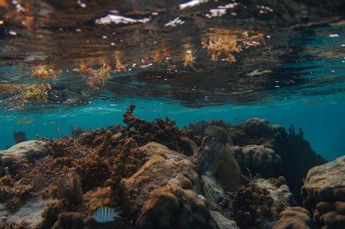 belize  caye caulker  underwater