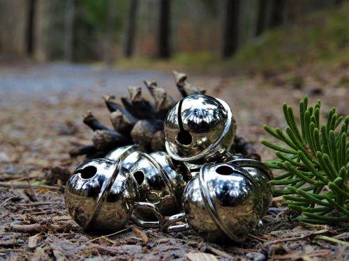 bell fir needle pine cones