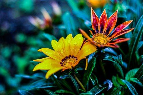 bella flor  naturaleza  gérbela