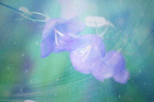 bells flowers summer