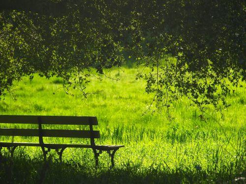 bench landscape park