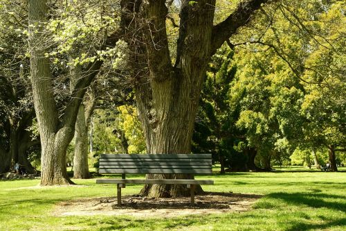 bench tranquillity park