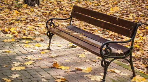 bench park autumn