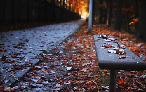 bench autumn the path