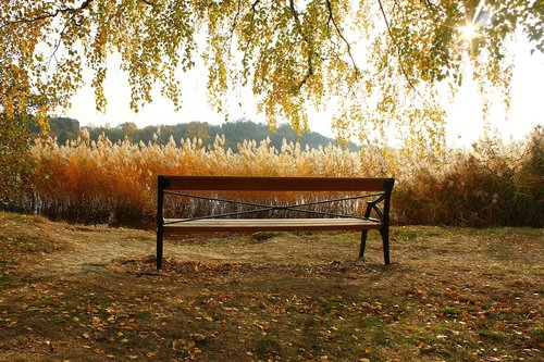 bench  autumn  nature