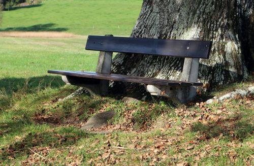 stendas,bankas,gamta,out,sėdynė,spustelėkite,poilsis,medis,medinis stendas