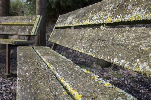 stendas,miškas,pavasaris,gamta,mediena,baldai,medinis stendas,medžio stendas,lentos,sėdėti