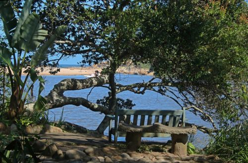 Bench In The Shade Next To Lagoon