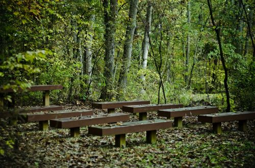 benches trees forest