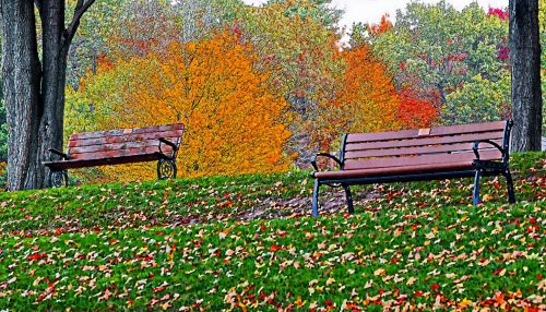 Benches In The Fall